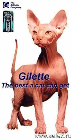 безшерстная кошка в рекламе Gilette