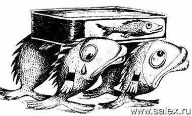 рыбки хоронят кильку в банке